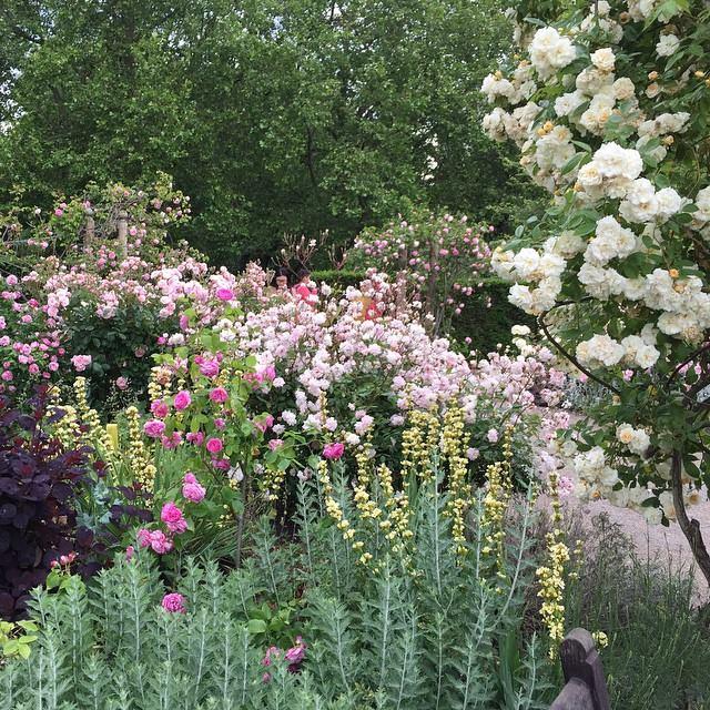Rose Garden_Hyde Park_London_UK_060815A